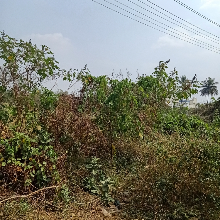cover-image-Picture-basaveshwara-nagar-1845934