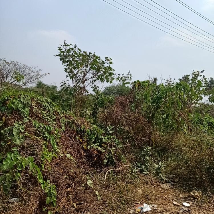 other-Picture-basaveshwara-nagar-1845934