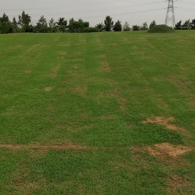 cover-image-Picture-greater-noida-authority-plots-1975788