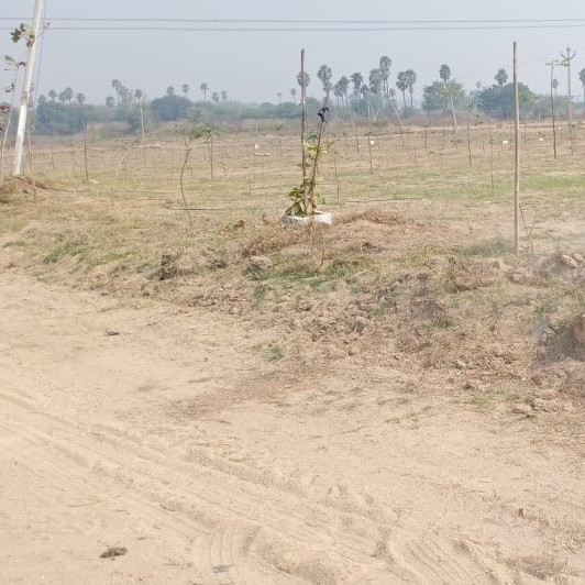 nearby-Picture-shankarpalli-2095307