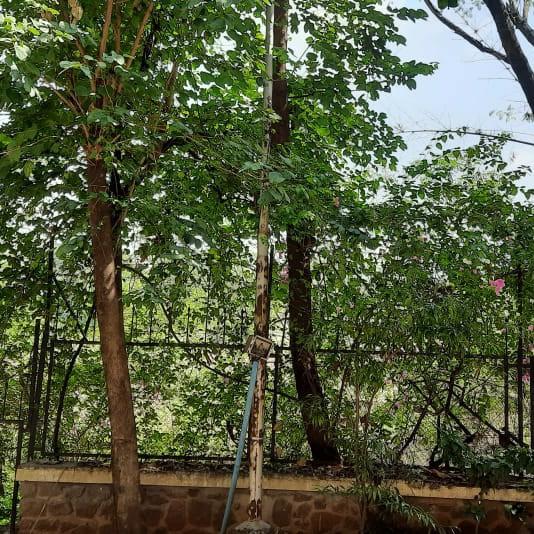 garden-Picture-suyog-aditya-residency-2640844